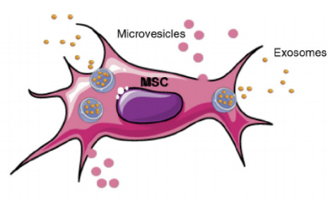 Microvesicles - Cell Therapy